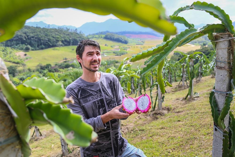 Longin Janzen é um dos dez produtores de pitaya de Massaranduba | Foto: Eduardo Montecino