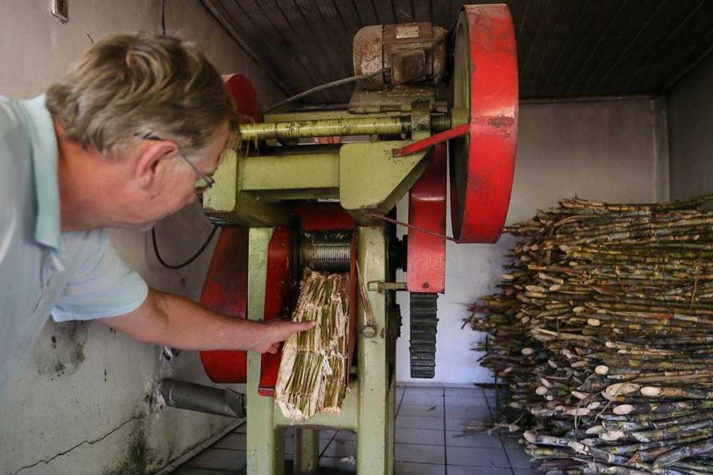 Toda a cana-de-açúcar utilizada na produção do melado é cultivada pela família em Araquari | Foto: Eduardo Montecino