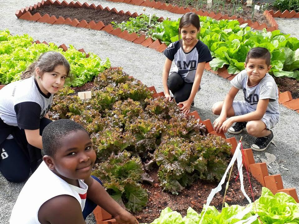 Hortas são cultivada pelos alunos da Escola Arnaldo Moreira Douat   Foto Divulgação