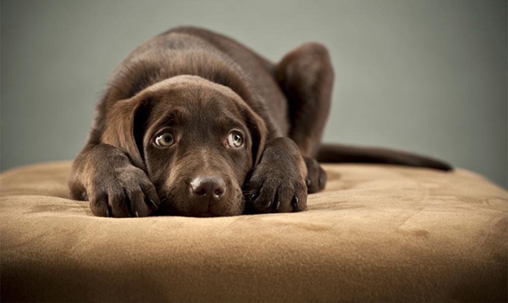 Estímulos sonoros podem desorientar, causar medo e até gerar agressividade   Foto: Blog Geração Pet