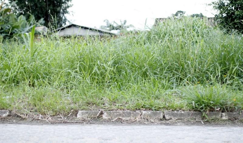 Terrenos com vegetação alta trazem riscos à saúde e  segurança da população, afirma governo | Foto Eduardo Montecino / OCP News