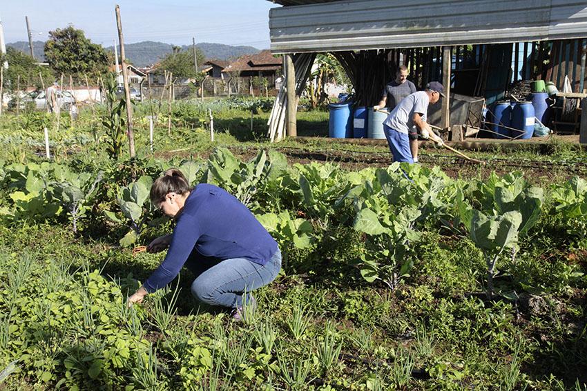 Horta Comunitária Girassol existe há nove anos no bairro Iririú   Foto Phelipi José/Prefeitura de Joinville