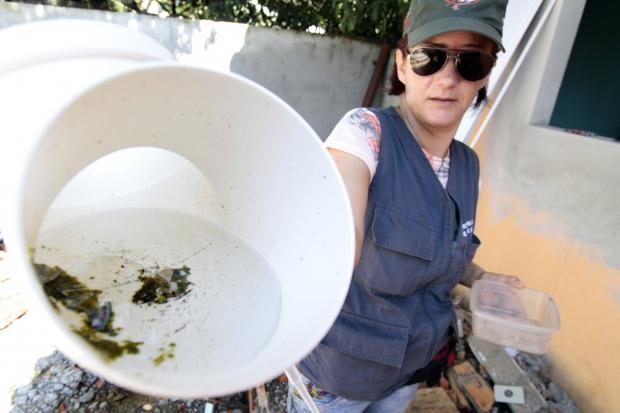 O Serviço de Vigilância Ambiental reforça o pedido aos moradores que mantenham o pátio limpo e livre de recipientes que possam acumular água | Foto Arquivo/Secom/Prefeitura de Joinville