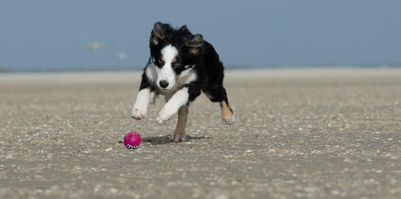 Proposta visa demarcar espaços para cães com seus tutores e com vigilância dos órgãos de fiscalização | Foto Divulgação