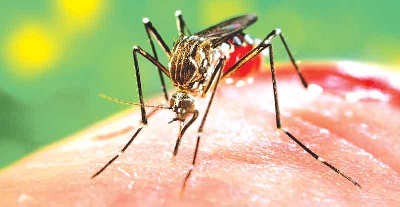 Mosquito se reproduz de maneira rápida   Foto Divulgação/O Diário Online